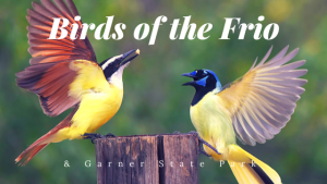 The Birds who call Garner State Park and the Frio River home